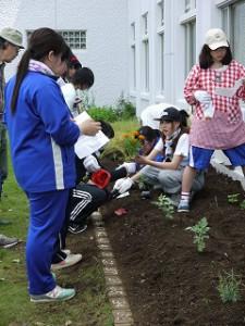 植える場所を考えて。