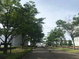 キャンパスの木々はすくすくと枝をのばしています